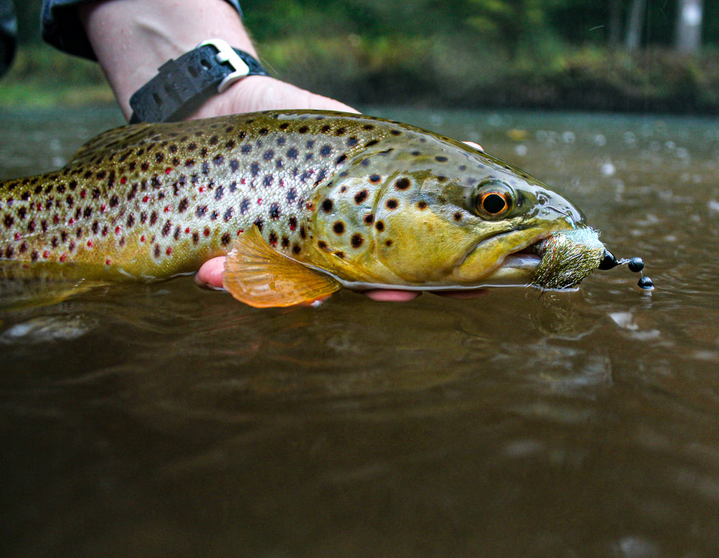 Fall brown trout fishing in PA.