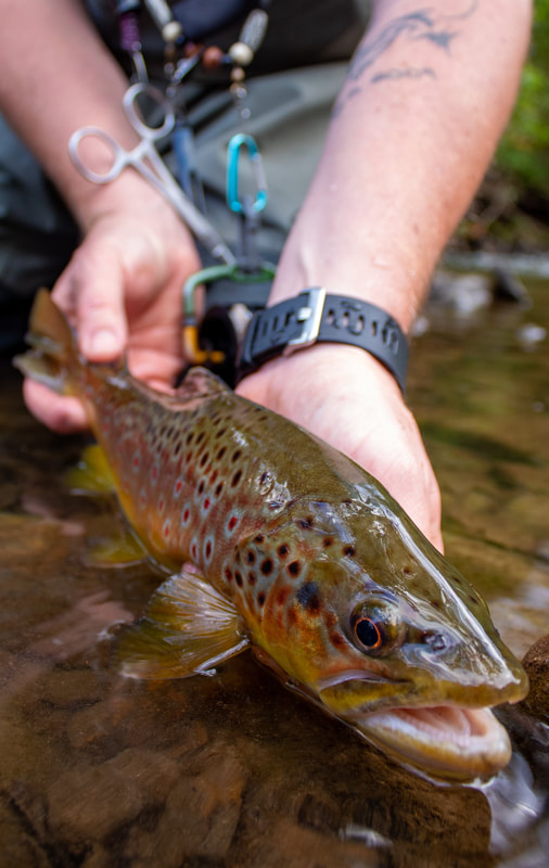 Fly fishing guide trips for Pennsylvania trout!
